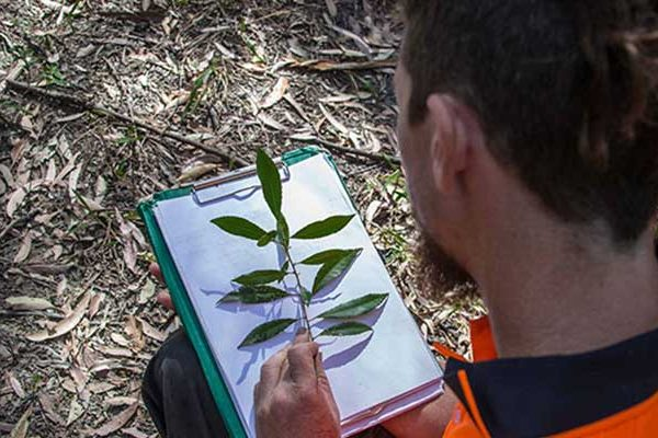 Diagnose Tree Diseases