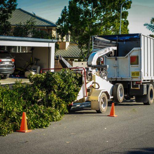 Treeculture mulch